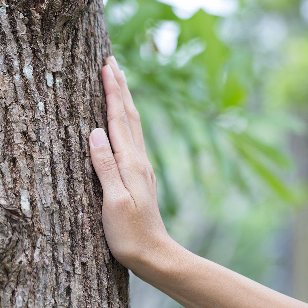 Main sur arbre