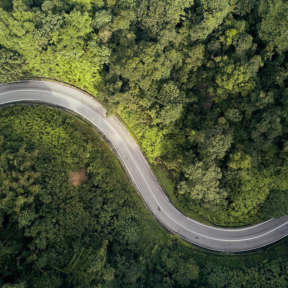 Route au milieu d'une forêt